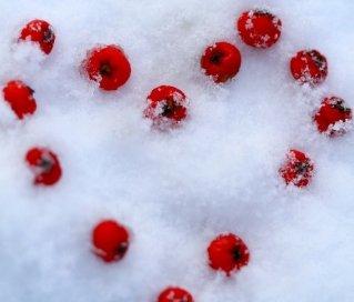 Eizellen einfrieren, Social Freezing. Verbesserung der Eizellenqualität mit Hilfe von Vitaminen und Ernährung