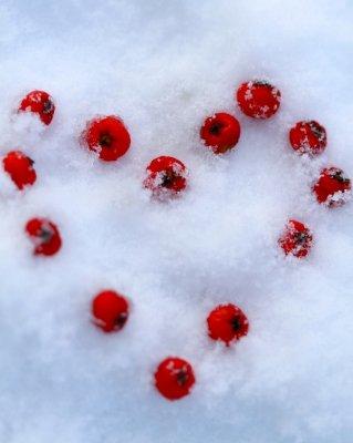 wer soll Eizellen einfrieren, Social Freezing