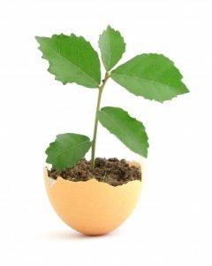 Coenzym Q 10 verbessert die Eizellenqualität